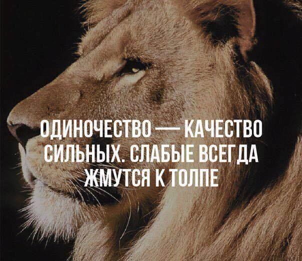 Юмор, цитаты,