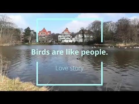 История любви. Птицы, как люди.Райские птицы 4К. ТВ молчок