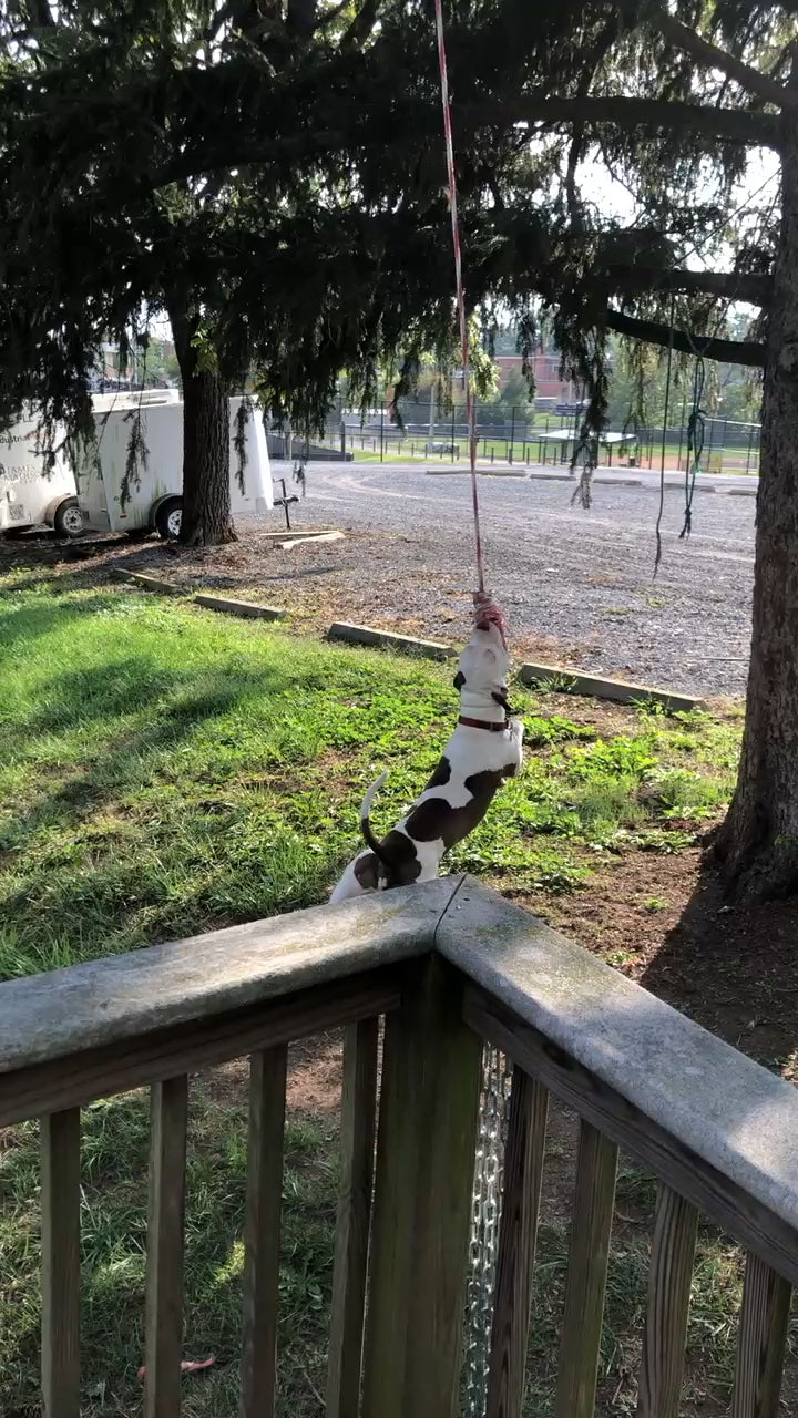 Моя собака будучи сам