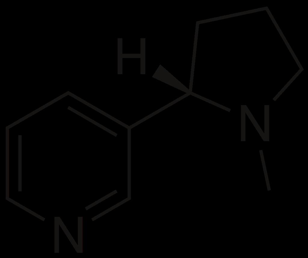 Изображение: https://ru.wikipedia.org/