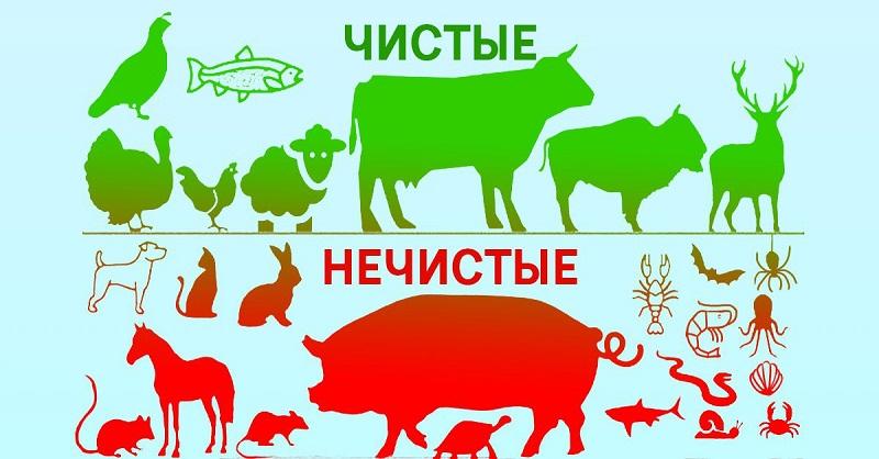 Изображение: http://ladylike.su/chistye-i-nechistye-zhivotnye-mnenie-uchenyh/
