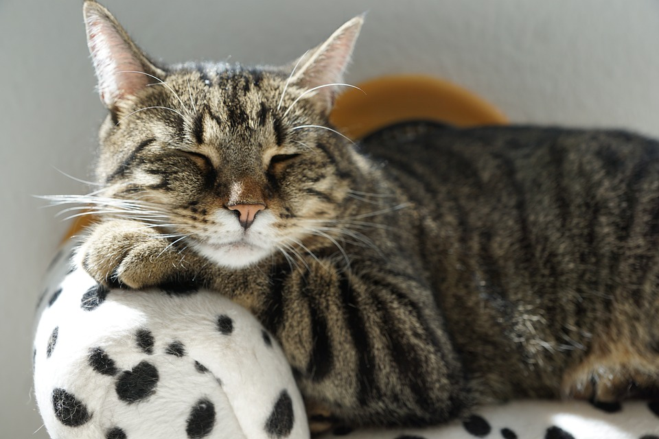 Кошачья психология: Счатлив ли ваш кот?
