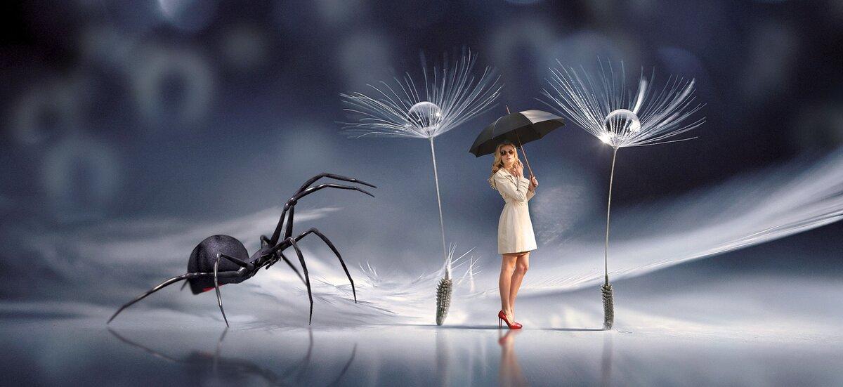 Как побороть страх перед пауками