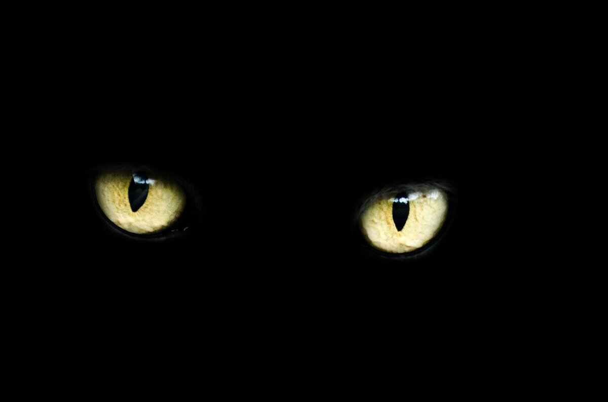 Психология проклятия - Чего нужно опасаться